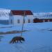Bilder zur Sendung Wildes Skandinavien
