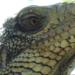 Bilder zur Sendung Geliebt und gejagt - die Tiere Tobagos