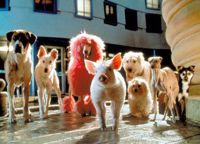 Schweinchen Babe in der grossen Stadt