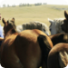 Bilder zur Sendung Von Pferden und W�lfen