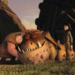 Bilder zur Sendung DreamWorks Dragons - Die Reiter von Berk