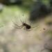 Bilder zur Sendung Verborgene Welten - Das geheime Leben der Insekten