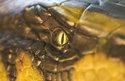 Kabel1 20:15: Anacondas: Die Jagd nach der Blut-Orchidee