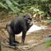 Bilder zur Sendung Angelique und die Gorillas