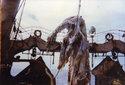 ZDFinfokanal 01:00: Monster aus der Tiefe - Unbekannte Urzeittiere