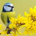 Bilder zur Sendung Wildes Gro�britannien - Fr�hling und Sommer