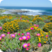 Bilder zur Sendung Namaqualand - Der Blumengarten Afrikas