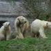 Bilder zur Sendung Neues aus dem M�nchner Tierpark Hellabrunn
