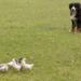 Bilder zur Sendung L�wenz�hnchen - Eine Schn�ffelnase auf Entdeckungstour