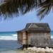 Bilder zur Sendung Jamaika - Die wilde Sch�ne der Karibik