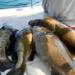 Bilder zur Sendung Catching Hell - Die Speerfischer von Florida