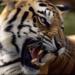 Bilder zur Sendung Deadly Top Ten - Die gef�hrlichsten Tiere der Welt