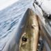 Bilder zur Sendung Shark Men - Die Haiforscher
