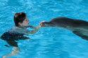 SRTL 20:15: Mein Freund, der Delfin