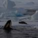 Bilder zur Sendung Das Geheimnis der Orcas