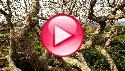 GEO Television 12:25: Das Geheimnis der B�ume